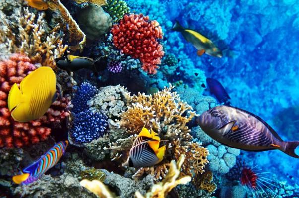 egyiptom színes halak
