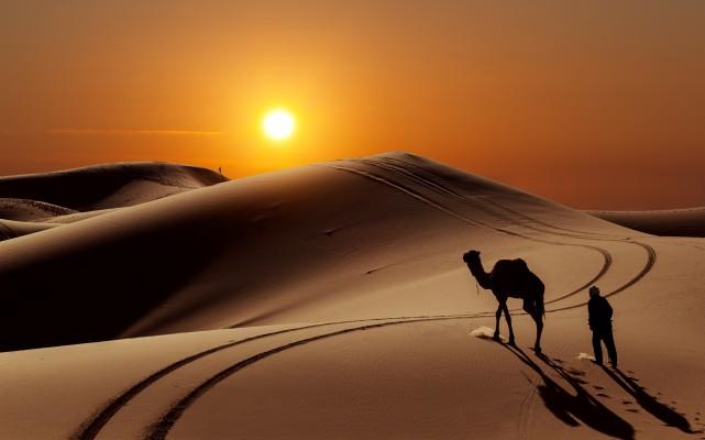 tunézia teve naplemente