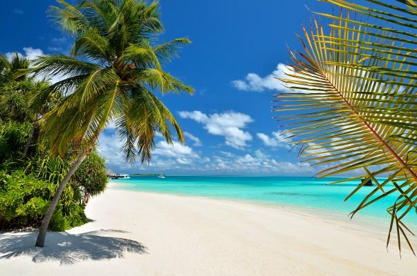 Maldív sziget tengerpart és pálmafa