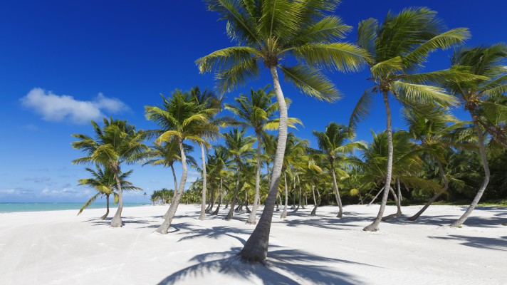 mauritius pálmafa és tenger