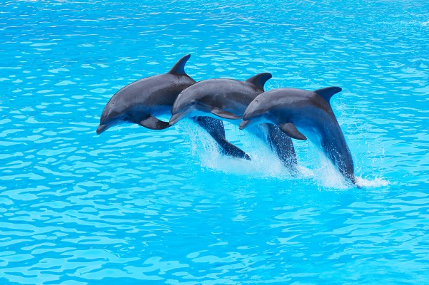 törökország delfin