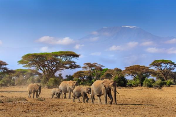 kenya elefáncsorda kilimanjaro előtt
